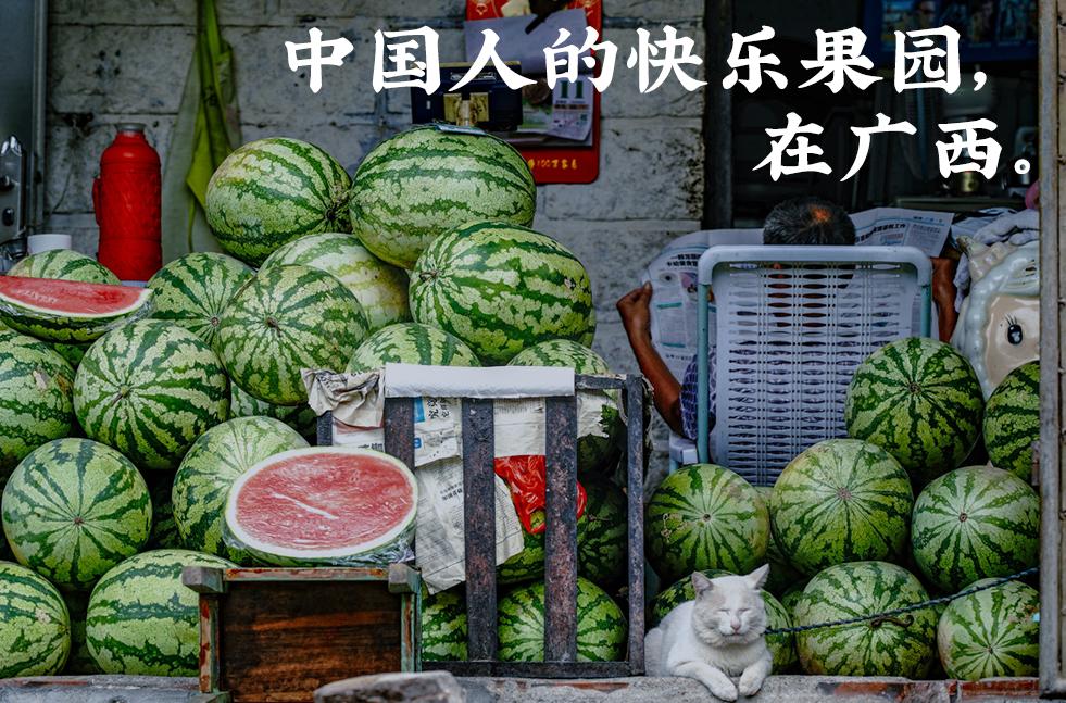 中国人的水果自由,都是老表给的