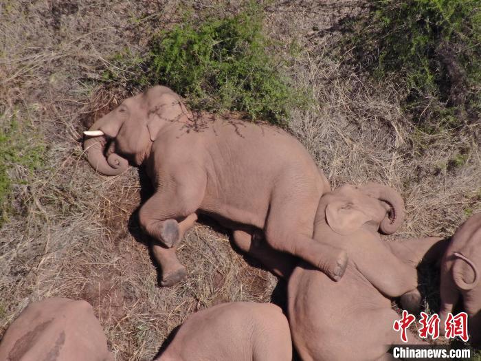 图为监测到的象群。云南省森林消防总队供图 云南省森林消防总队供图