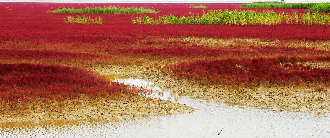 图/黄河三角洲湿地