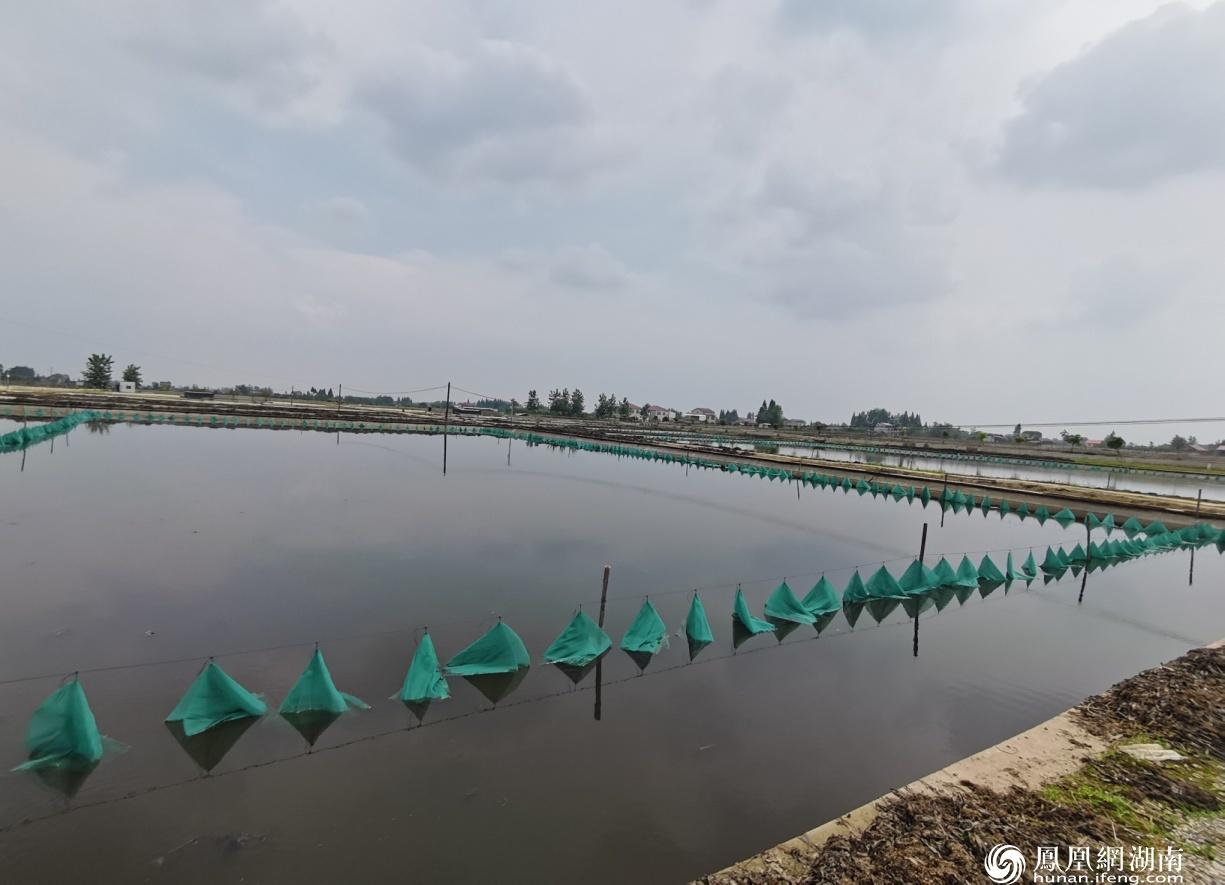 甲鱼基地大面积养殖池塘