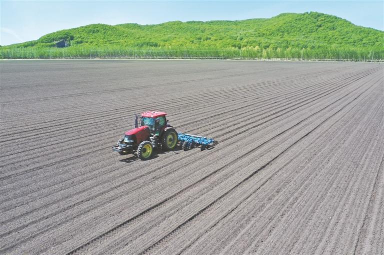 勤得利分公司进行第一遍中耕作业。母彬摄