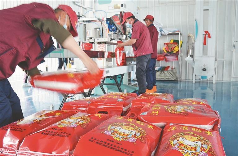 合作社稻米加工厂区,十几名社员正在车间里给大米装袋打包。