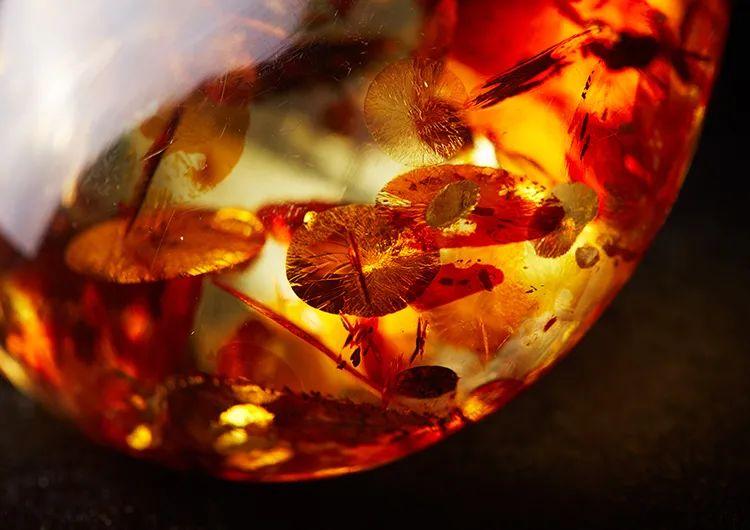 蝉虫、蚂蚁、飞蛾……落入这金泪珠,竟价值连城