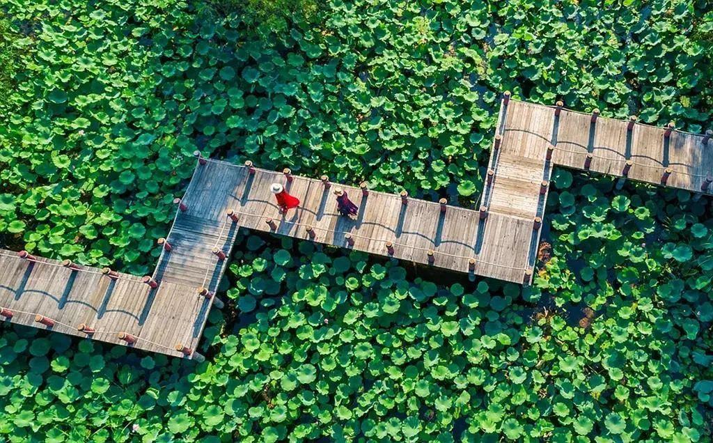 图/ 台儿庄运河湿地