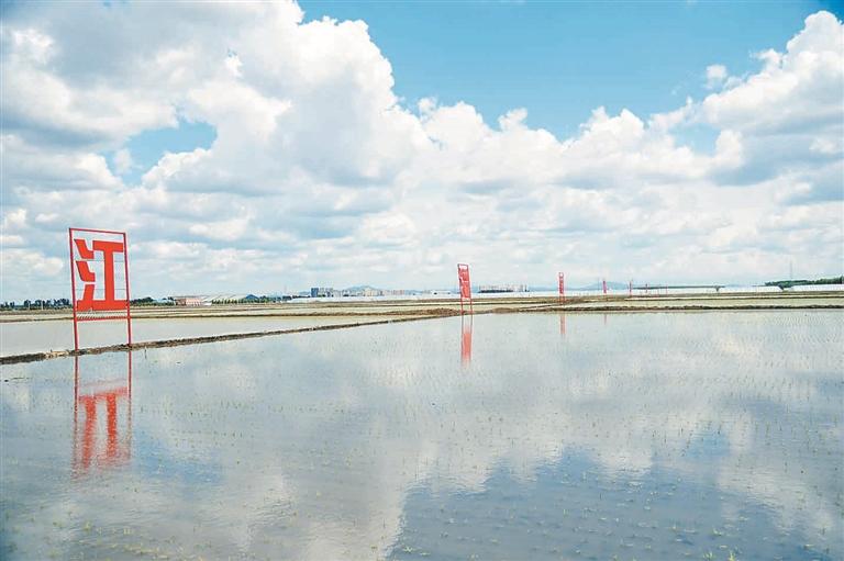 江灌稻区。