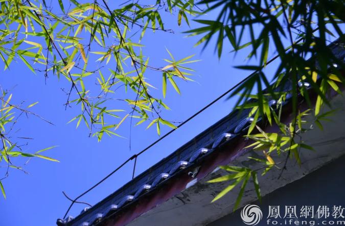 图片来源:凤凰网佛教 摄影:东华禅寺
