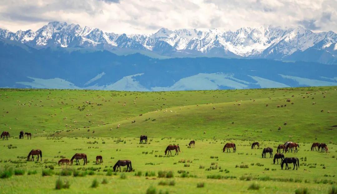 一到夏天,这里就成了新疆最美的地方