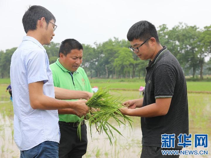 丁旦(右)与合作社成员检查秧苗的病虫害情况。 受访者供图