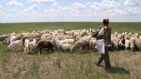 月薪六千包吃住牧羊人招聘走红 企业回应