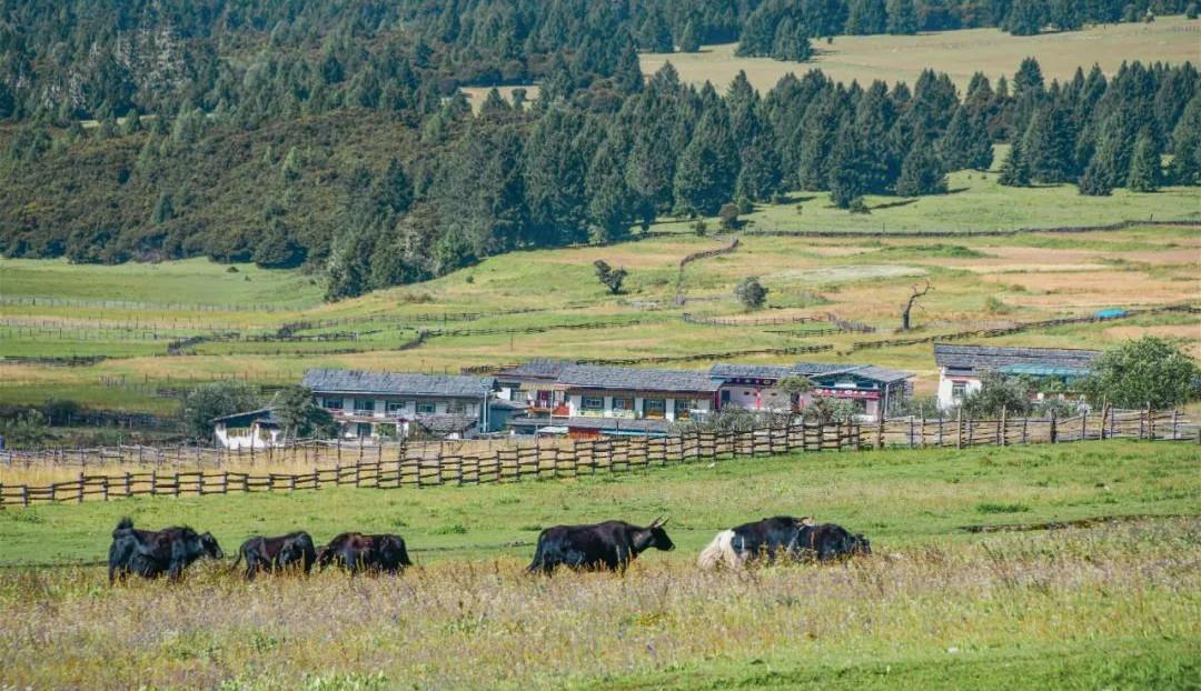 中不用去瑞士,西藏就有同款美景,雪山湖泊草原村庄