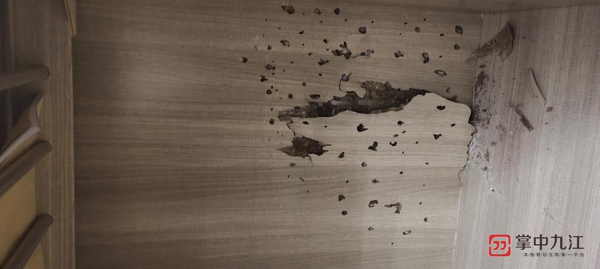 """买房时需留心!九江市民刚买的二手房被白蚁""""掏空"""""""