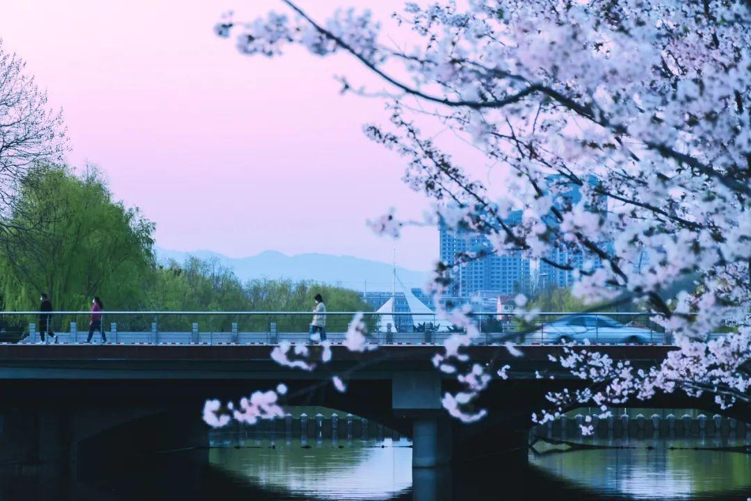▲樱花湖 ©图虫:无聊的旁观者