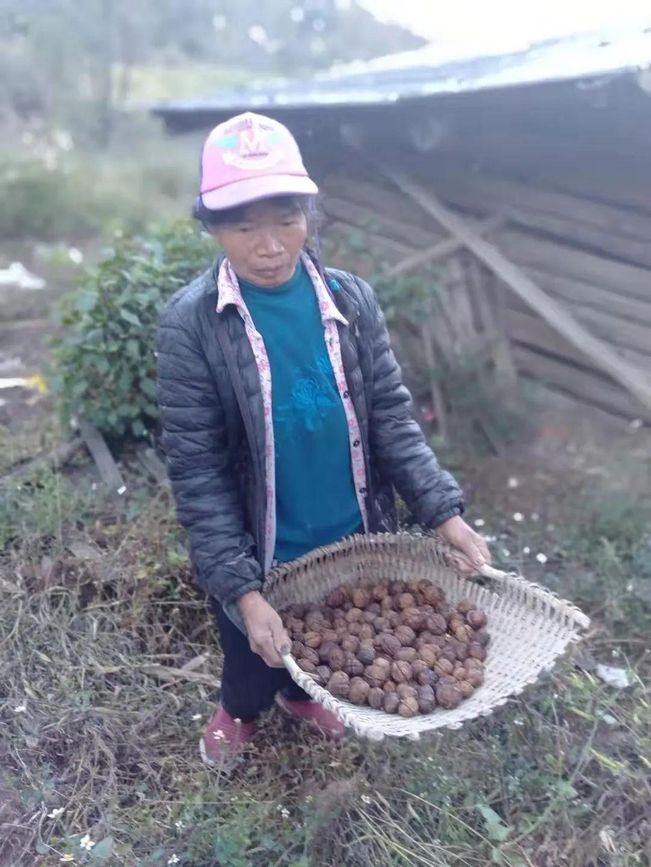100万斤云南高山古树核桃盼销路,口感酥脆香浓,不漂白不打药