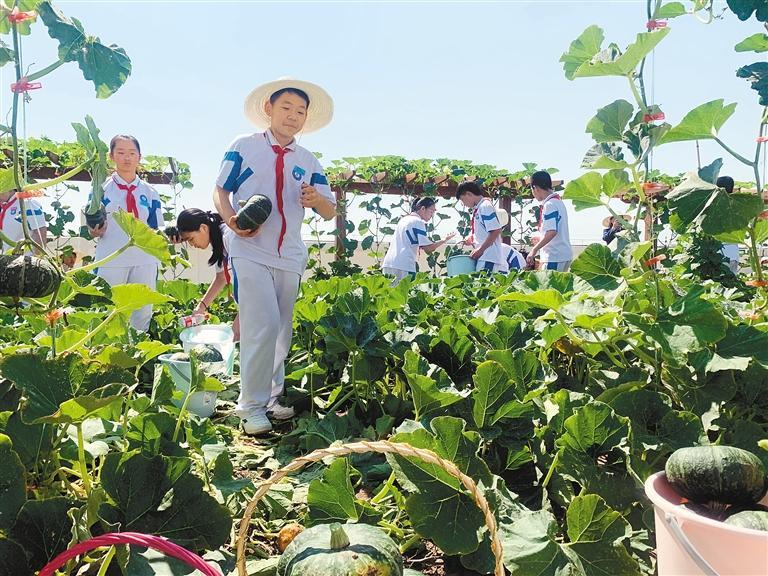 学生在教学楼楼顶的凌云农场摘南瓜