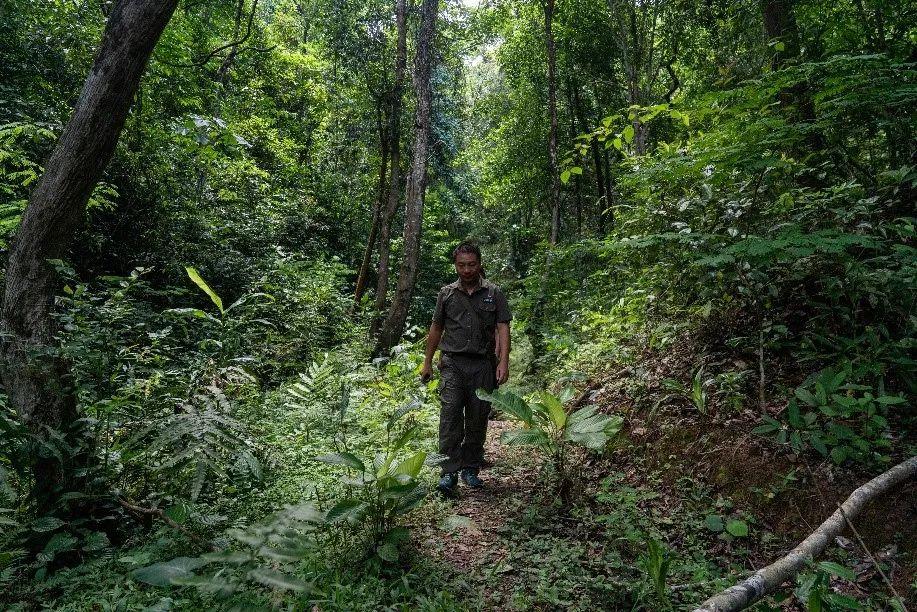 王斌行走在丛林中