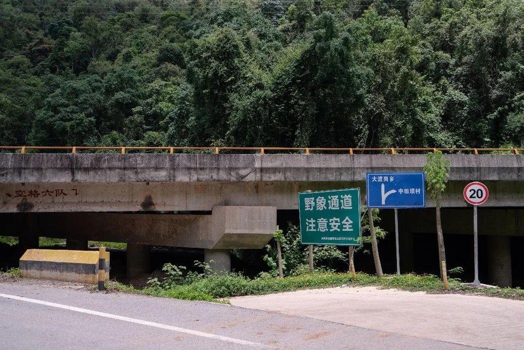 在村公路旁,一个指示牌上标记出大象通道的位置