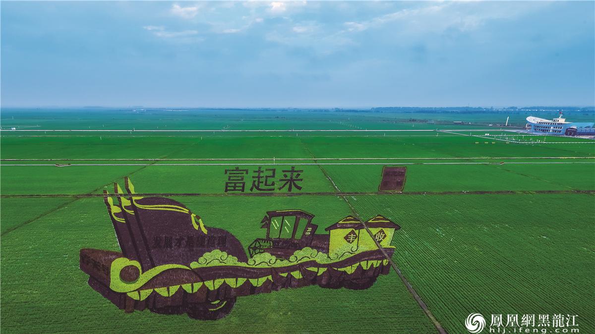 富锦市万亩水稻公园。曲延林摄