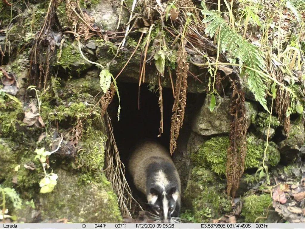 出现在人工洞穴附近的野生动物。图源大熊猫国家公园管理局
