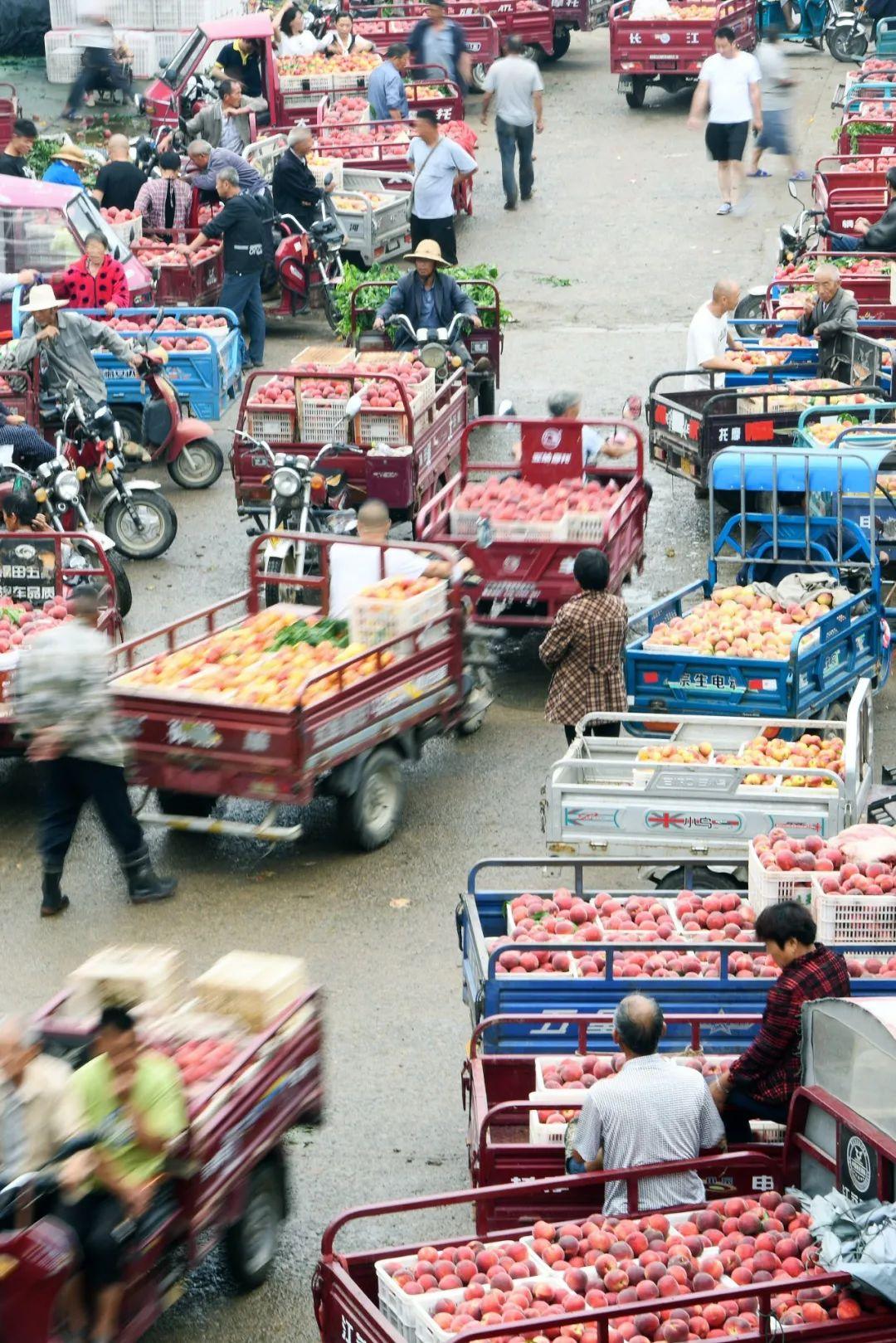 ▲ 桃子丰收季,忙碌的山东水果市场。 图/视觉中国