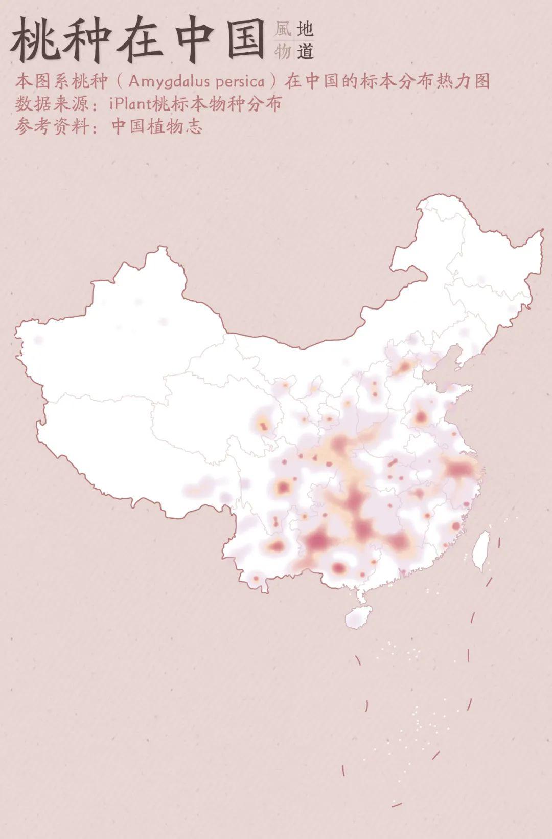 ▲ 桃种在中国的标本分布热力图,江浙沪地区是其中的产桃大区。 制图/Paprika