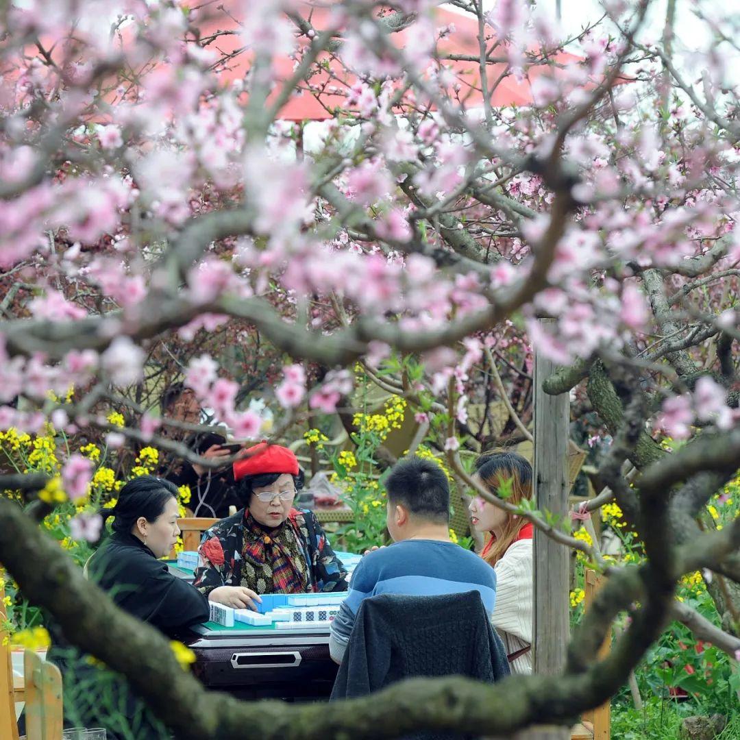 ▲ 龙泉山桃花树下血战到底,巴适得板。 图/视觉中国