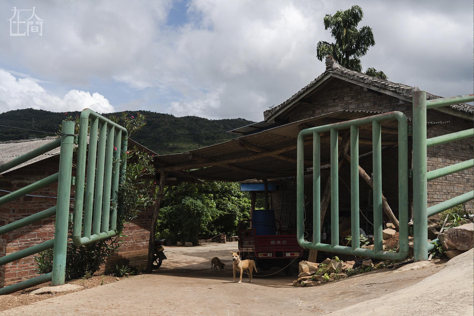 在人间 大象家族出走地村民:它们吃了我们二三十年