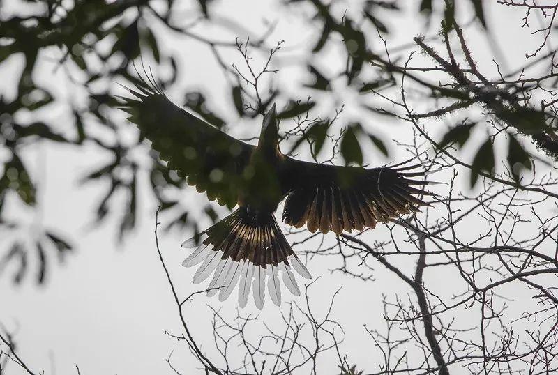 今年3月,云南盈江县,被镜头捕捉到的棕颈犀鸟。图源新华社