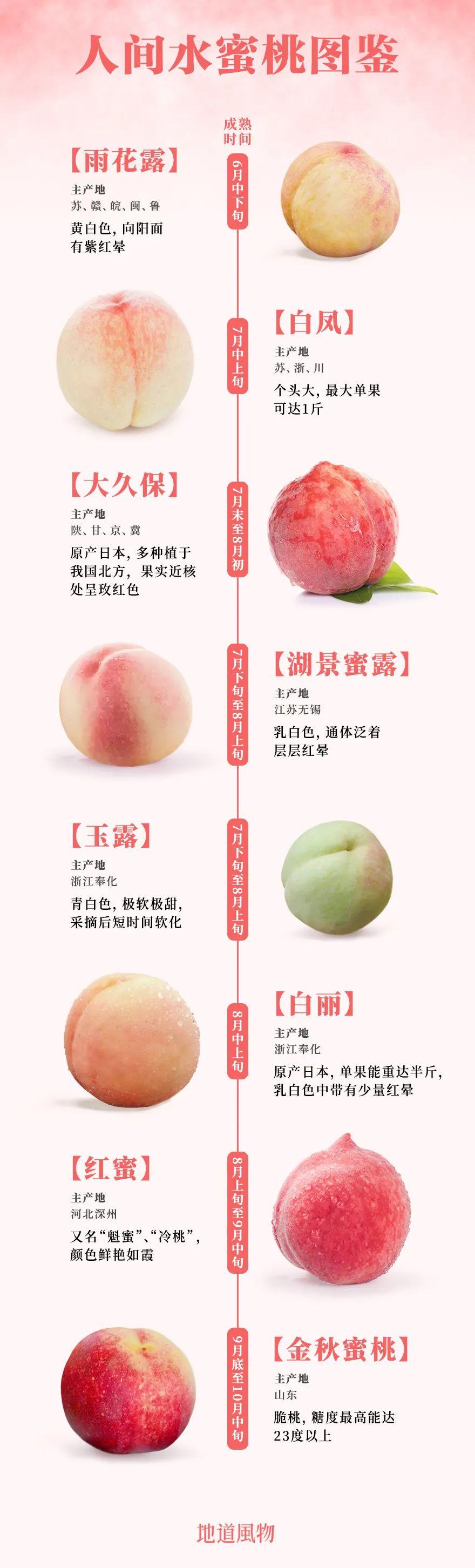 ▲ 如今市面上部分知名的蜜桃和水蜜桃(其中金秋蜜桃为脆桃)。设计/刘航