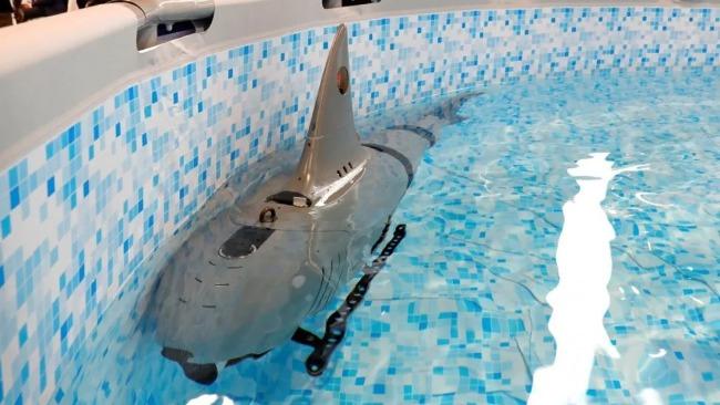 """美媒关注中国""""机器鲨鱼"""" 不忘强调美国拥有""""秘密武器"""""""