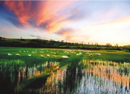 苍头河湿地