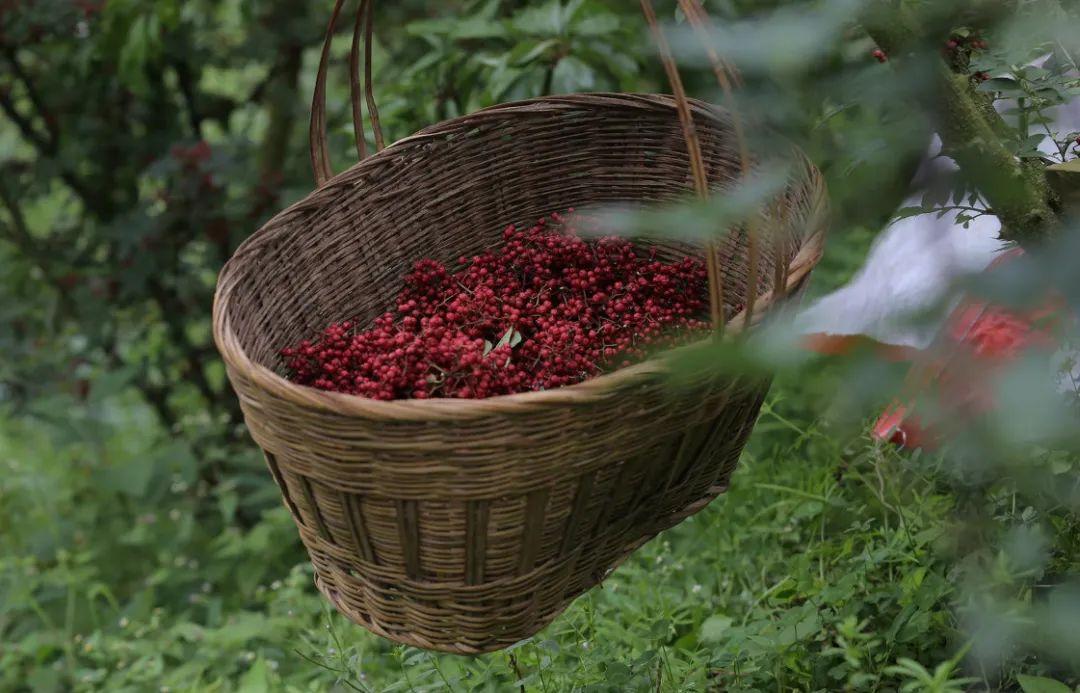 ▲ 雅安独特的水土给了汉源花椒优良的种植环境。摄影/斑马不是斑马,图/图虫·创意