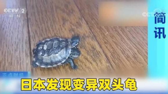 """基因突变!日本惊现变异""""双头龟"""""""