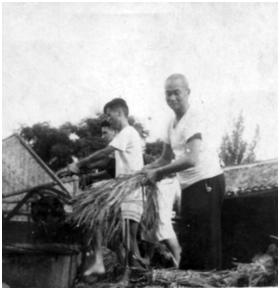 ▲1963年马松生参加县人民委员会(县政府)实验田劳动