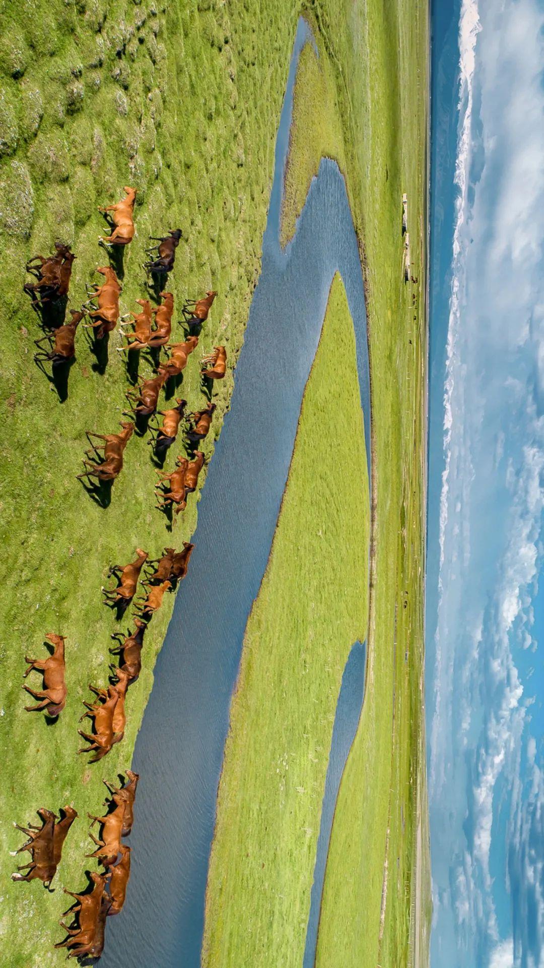 """▲ 群马奔腾在河畔,伊犁的昭苏是著名的""""天马之乡"""",盛产骏马。摄影/赖宇宁"""