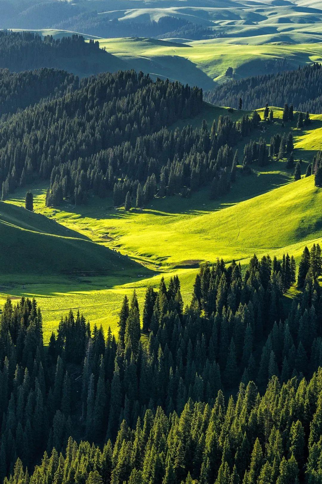 ▲ 库尔德宁草原,雪岭云杉的王国。摄影/赖宇宁