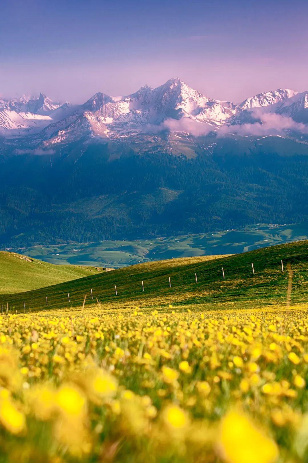▲ 草原上的花海与雪山。摄影/万瑞