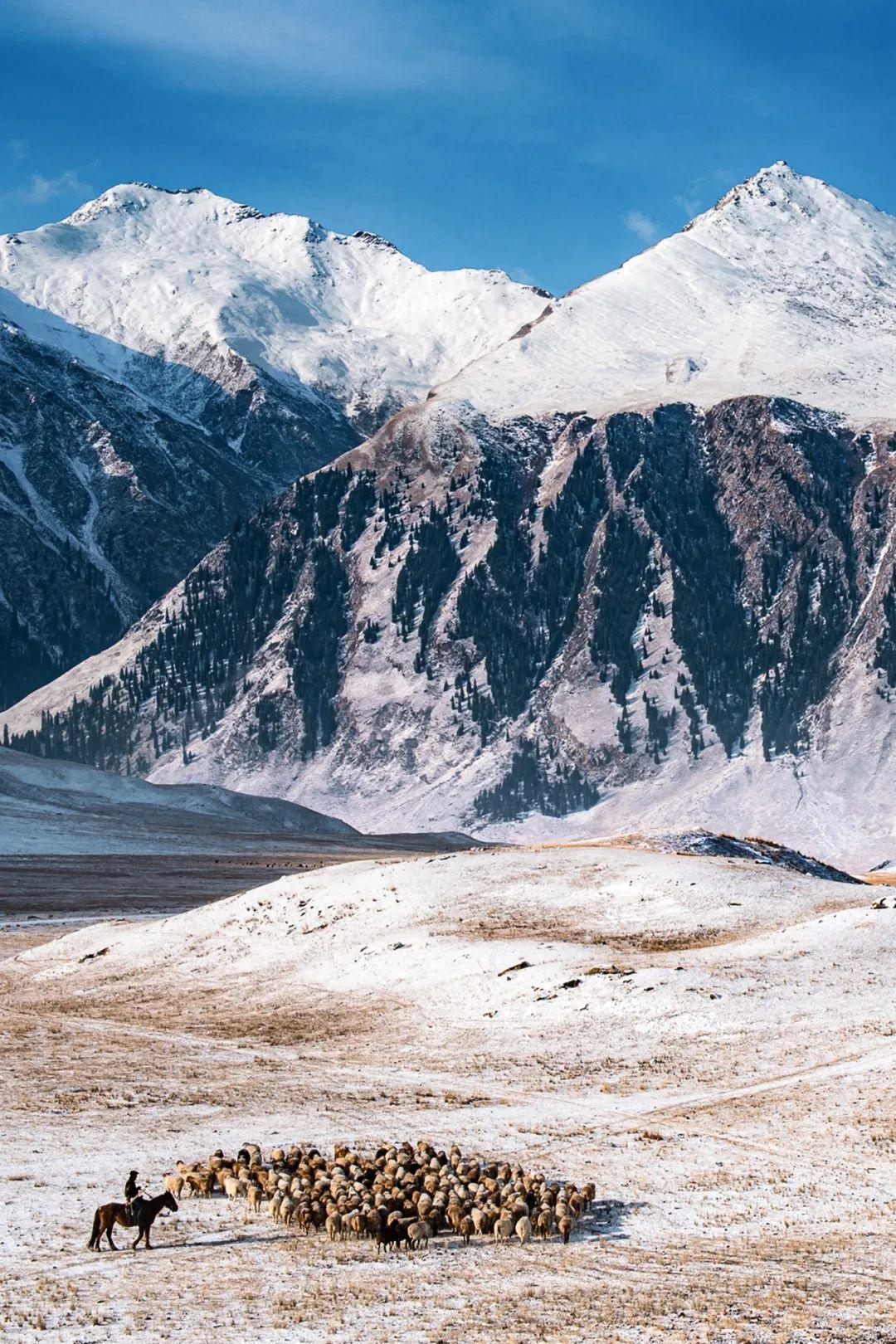 ▲ 博罗科努山。位于伊犁河谷北部的北天山,山脚下的牧民正在放牧。摄影/赖宇宁