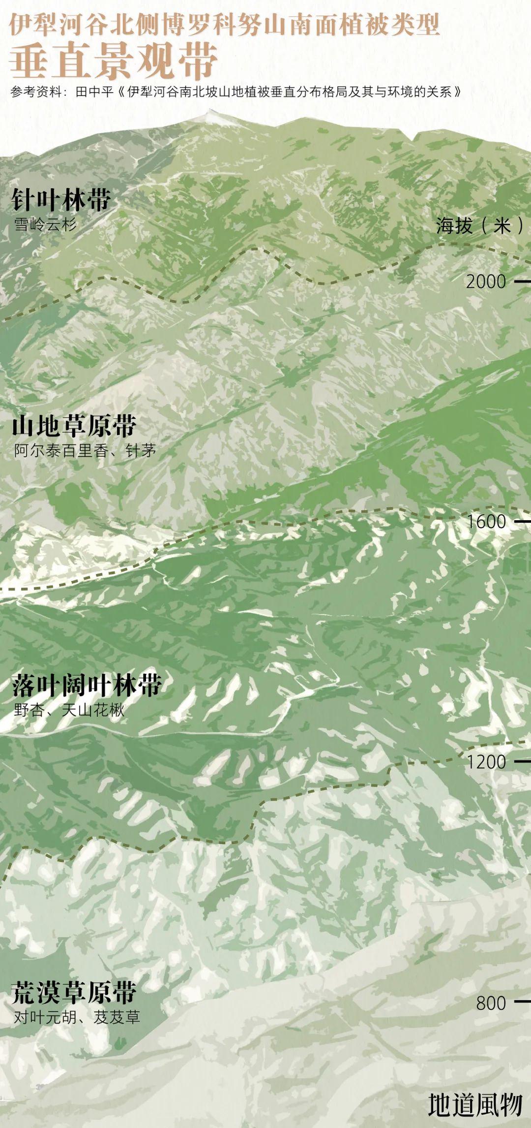 ▲ 迎风的伊犁河谷北侧,降水相对丰富,山地植被也更为茂盛。 制图 /F50BB