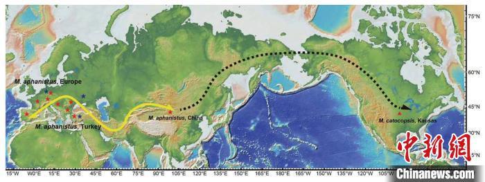 剑齿虎属自欧亚向北美的迁移。 孙博阳 供图