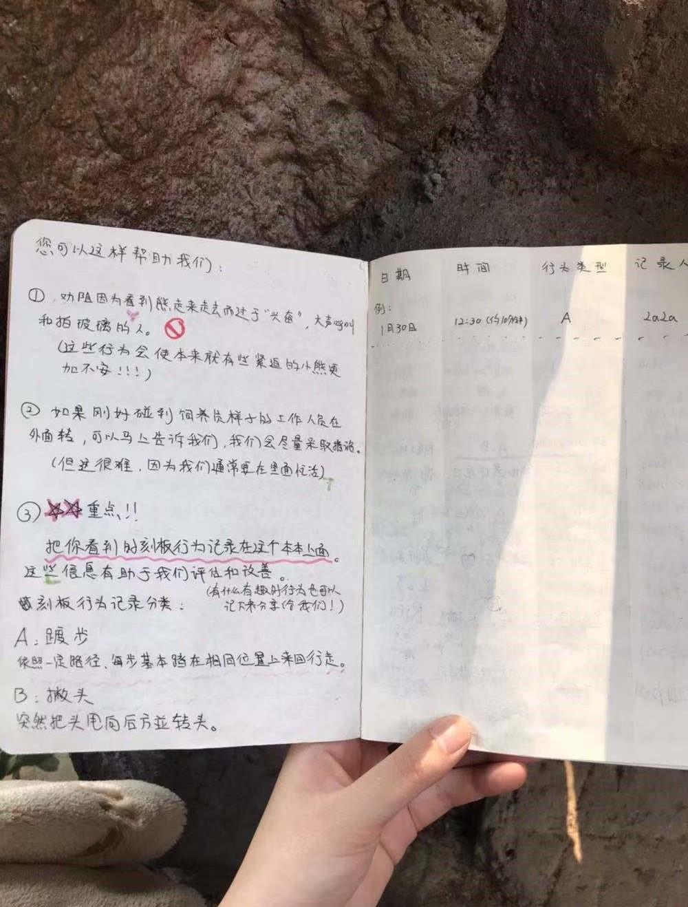 """在南京红山森林动物园亚洲黑熊展区,游客可以协助记录动物的""""刻板行为""""。"""