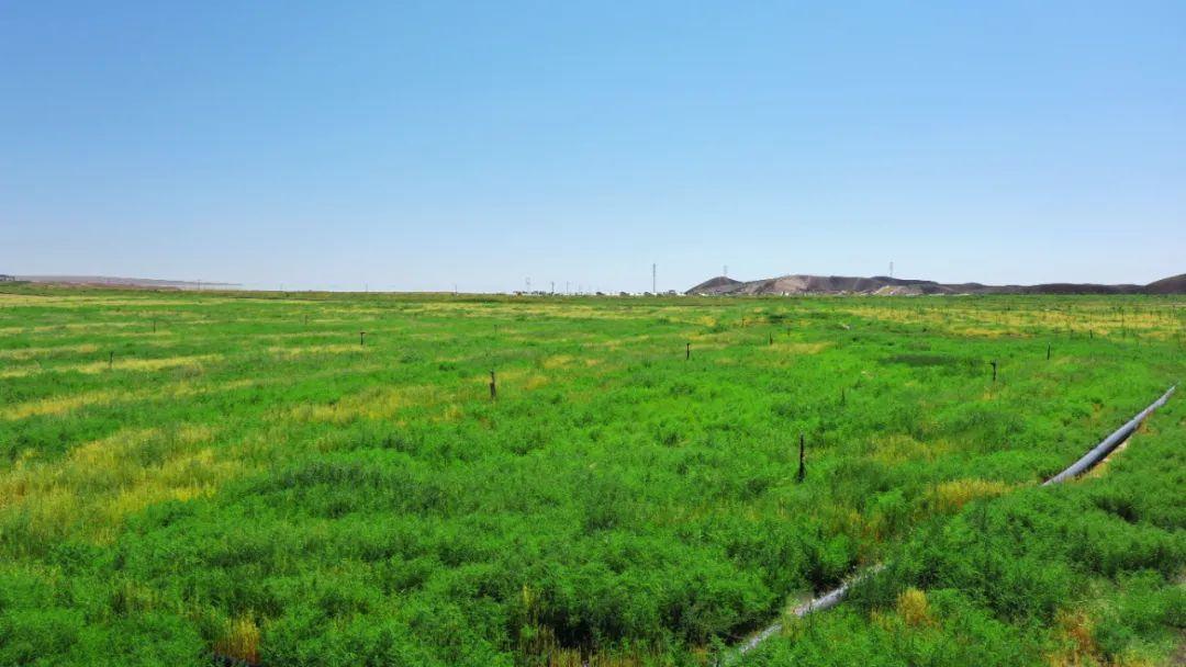"""近2万亩土地复耕复绿 看兰州新区这处""""整容""""成功案例"""