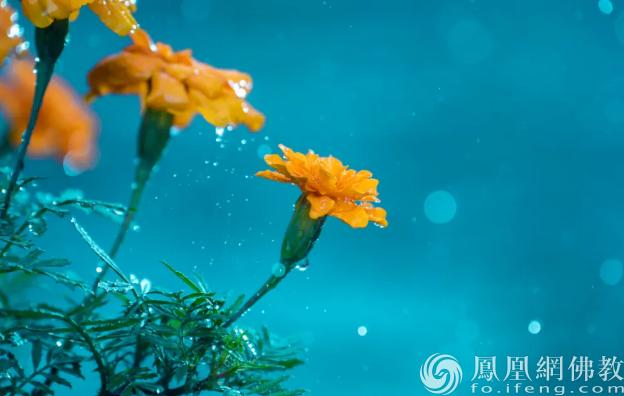 图片来源:凤凰网佛教 摄影:孟和德力根