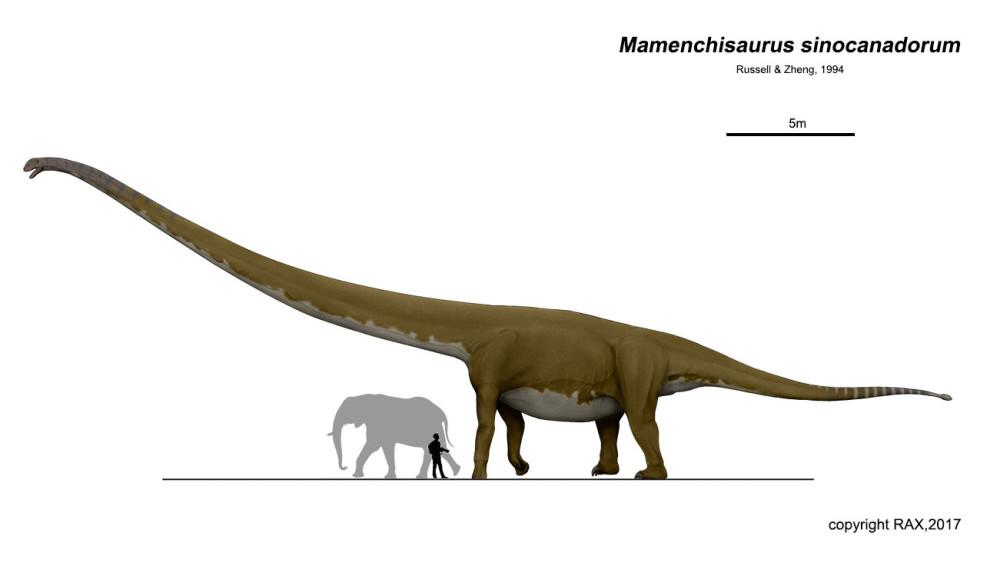 图注:中加马门溪龙与人类的体型对比,作者RAX博士