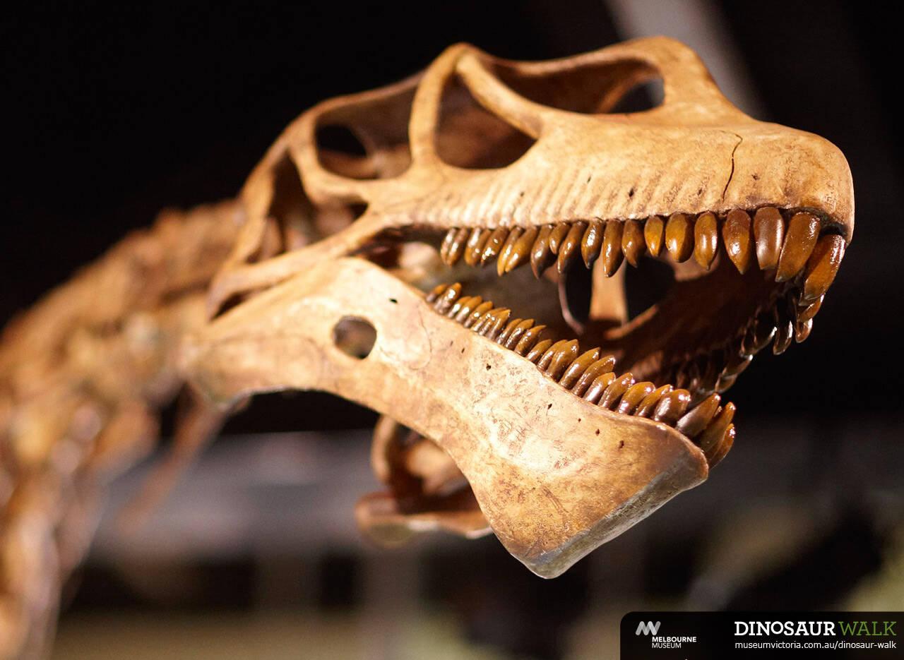 图注:中加马门溪龙的头骨及满嘴的牙齿,图片来自网络