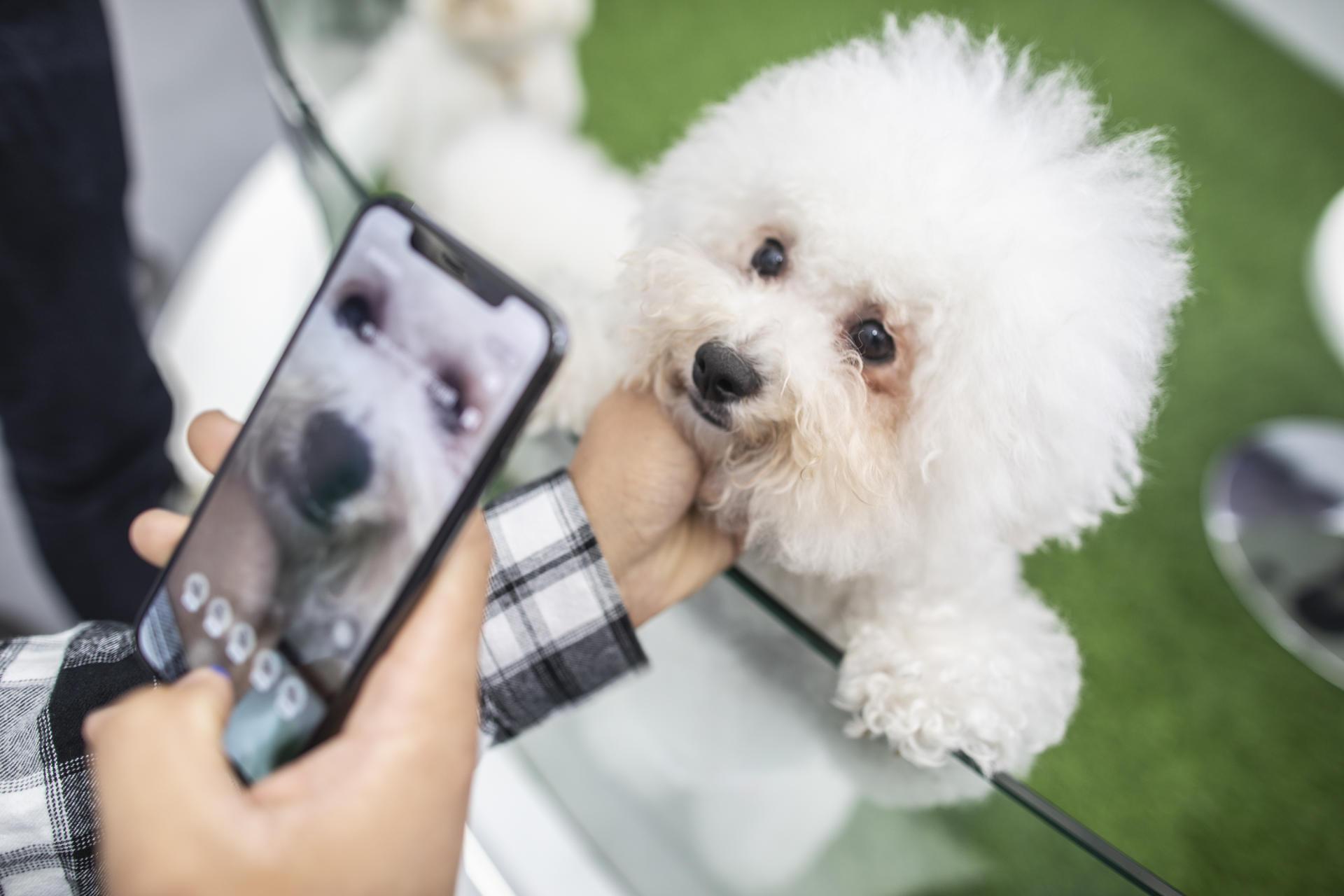 宠物鼻纹识别技术,只需把宠物的鼻子部位对准手机屏幕中的对应位置,就可以自动识别宠物的名字等信息。