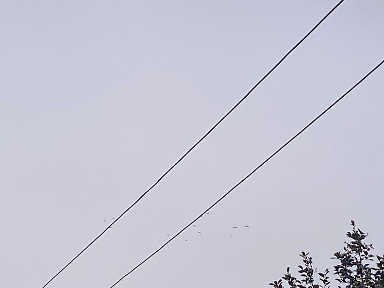北京雨燕飞越电缆。