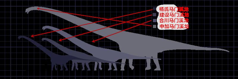 图注:中加马门溪龙与其他种类马门溪龙体型的对比,图片来自网络