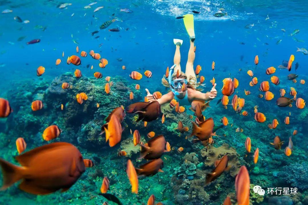 五彩缤纷的海底世界 图1:Nariman Mesharrafa/Unsplash 图2:V_E/Shutterstock 图3:Denis Moskvinov/Shutterstock