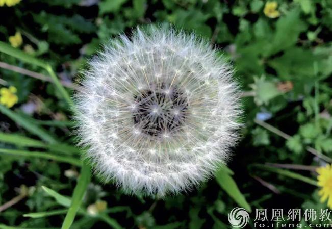 """佛慧法师:春风得意时警惕那些猝不及防的""""爱别离"""""""
