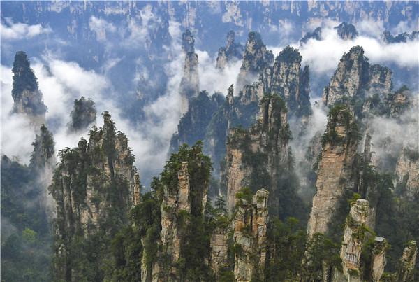 张家界武陵源核心景区,雨后云雾飘渺,神奇的峰林掩映在云海之中,如梦如幻,胜似仙境。图/邵颖
